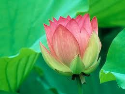 Dr Sanjay Kumar Cardiothoracic Cardiac Heart Surgeon - lotus